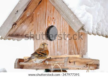 The Brambling (Fringilla montifringilla) perching on a wooden bird feeder house during the snow falling in Europe - stock photo