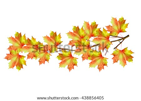 The branch of autumn maple leaves isolated on white background.