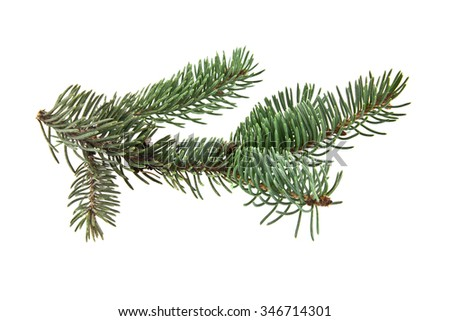 the branch of fir-tree is isolated on a white background - stock photo