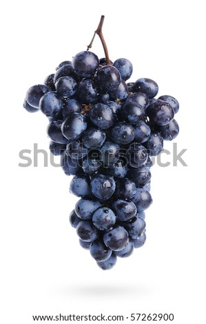 The branch of grapes with water drops, isolated - stock photo