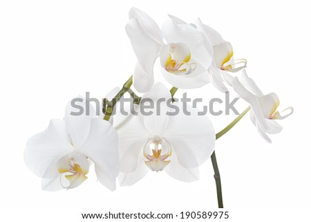 The branch of orchids on a white background - stock photo