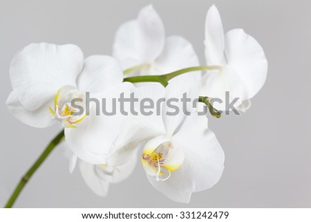 The branch of white orchid - stock photo