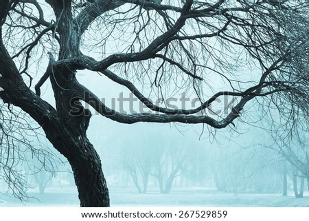 The branches of a big tree in the Park on a black and white photograph of a cold green shade, fog in the Park - stock photo