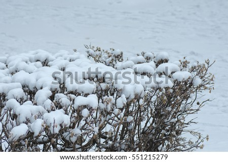 The branches of bushes cover by snow. Photo taken at cloudy day.