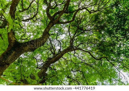 tamarind tree stock images, royaltyfree images  vectors, Beautiful flower