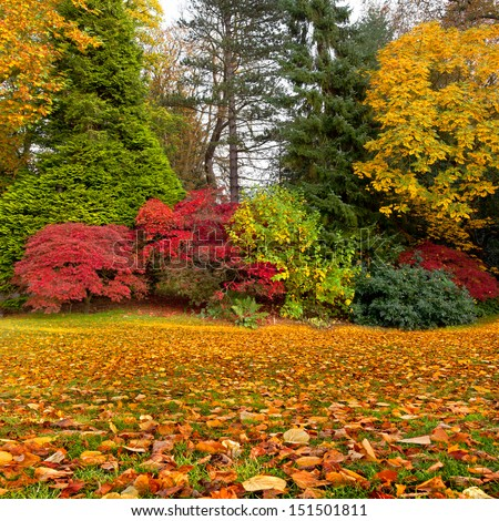 The bright colors of autumn trees. Dry leaves in the foreground. Autumn landscape. - stock photo