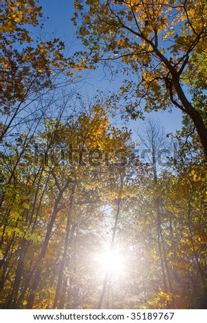 The bright colors of fall as seen in the woods in New England. - stock photo