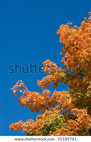 The bright colors of fall as seen on a tree found in New England.  Lots of copyspace. - stock photo