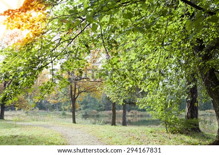 The bright  early autumn forest - stock photo