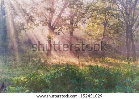 The bright sun rays shining through branches of trees, vintage landscape - stock photo