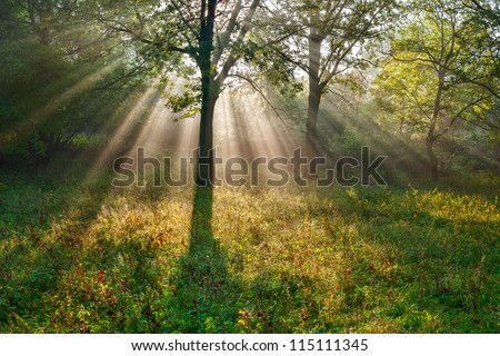 The bright sun rays shining through branches of trees, wood landscape - stock photo