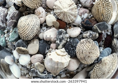 the bright underwater digital photo of a seabed with a set of various stones and cockleshells - stock photo