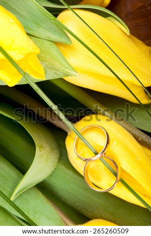 the bright yellow tulips and wedding  rings - stock photo