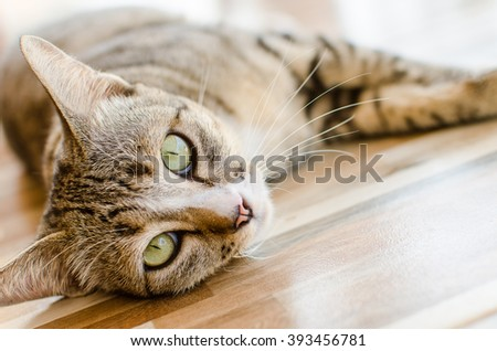 The brown cat have a big eye was beautiful. - stock photo