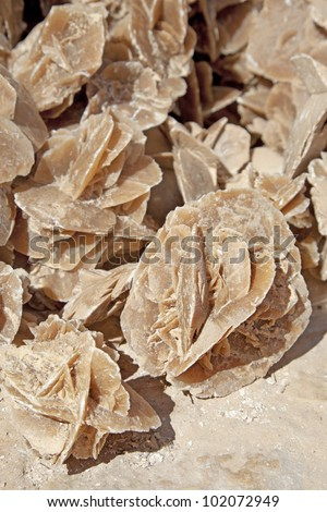 The brown crystalline rocks found in Sahara desert, the formations that so resemble a petrified flower, popular as a souvenir from the desert. - stock photo