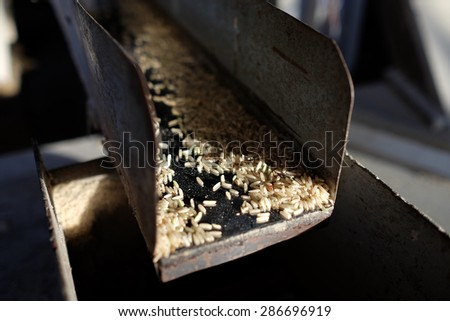 The brown rices were came out from the paddy separator machine. In rice milled, Thailand. - stock photo