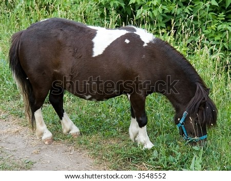 The brown-white pony burns a grass in city park. - stock photo