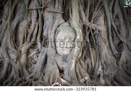 The buddha head in the wood