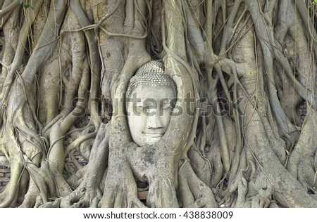 The buddha head that holding with tree roots.