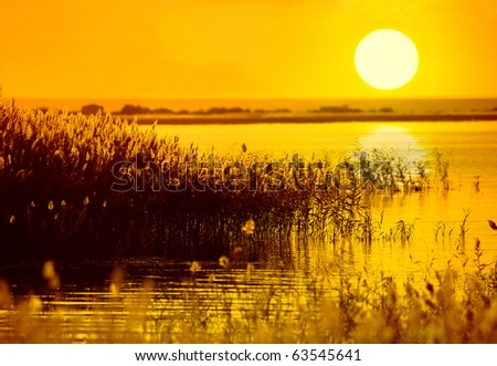 The bulrushes against sunlight over sky background in sunset with a flighting bird - stock photo