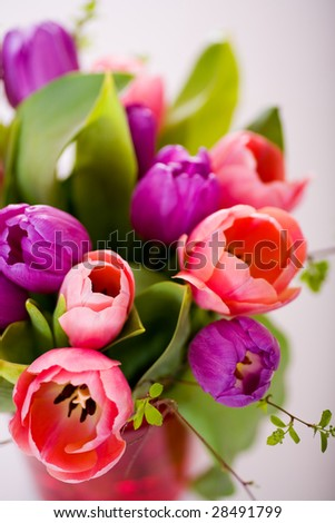 the bunch of tulips on the white surface - stock photo