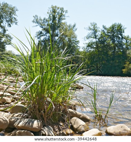 The bush of a green grass growing among stones on the bank of mountain small river