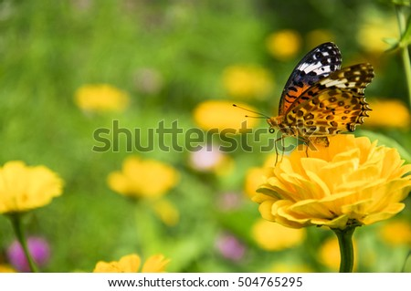 The butterfly and flower closeup with green background in garden