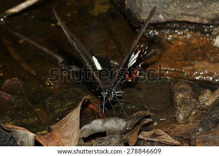 The butterfly at waterfall in thailand - stock photo