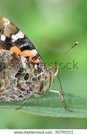 the butterfly feeding on the plant - stock photo