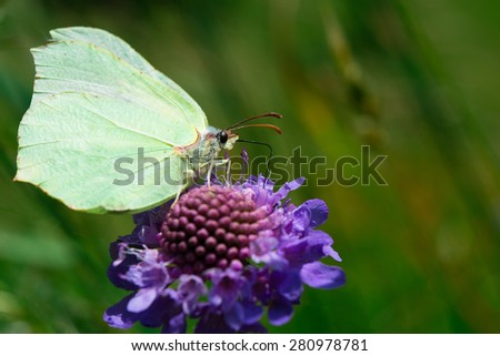 The butterfly is sucking nectar from flower - stock photo