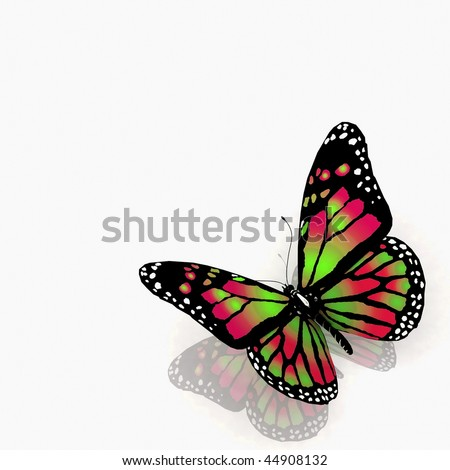 The butterfly  on a white background