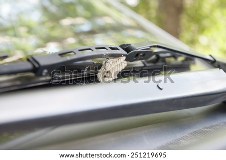 the butterfly sits on glass car - stock photo