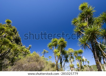 The cabbage tree is one of the most distinctive trees in the New Zealand landscape - stock photo