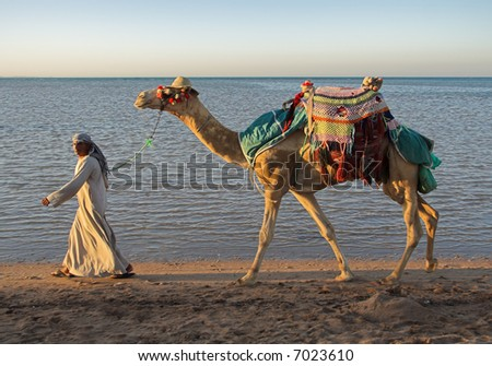 The camel and the drover go along the sea - stock photo