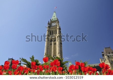 The Canadian Parliament Building framed by Red Tulips in the Spring in Ottawa, Ontario � the nation's capital. Canadian Tulip Festival in Ottawa, Canada. The focus is on the Peace Tower. - stock photo