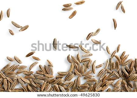 the caraway - stock photo