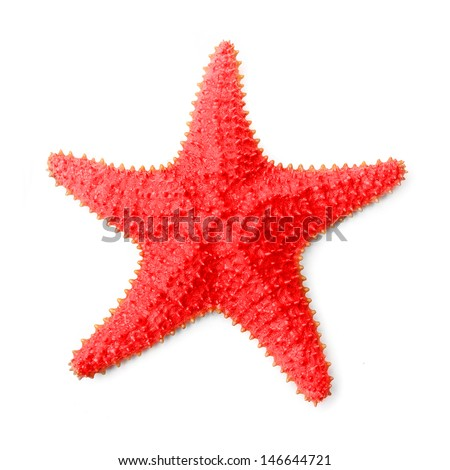 The Caribbean starfish (Oreaster reticulatus). - stock photo