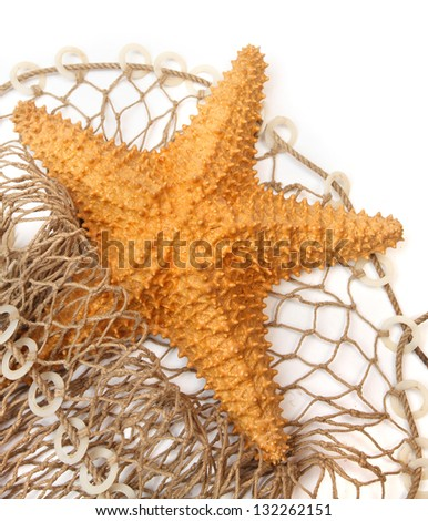 The Caribbean Starfish (Oreaster reticulatus) on a fishing net. - stock photo