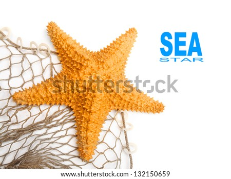 The Caribbean Starfish (Oreaster reticulatus) on a fishing net.  Picture with space for your text. - stock photo