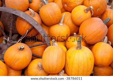 The carving of pumpkins is associated with Halloween in North America where pumpkins are both readily available and much larger- making them easier to carve than turnips.