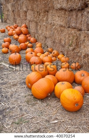 The carving of pumpkins is associated with Halloween in North America where pumpkins are both readily available and much larger- making them easier to carve than turnips - stock photo