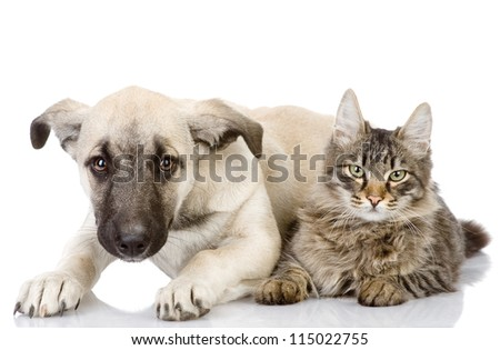 the cat and dog lie together. Isolated on a white background - stock photo