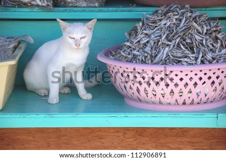 The cat and dried fishes. - stock photo