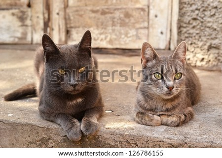 the cat and the cat near an abandoned house - stock photo