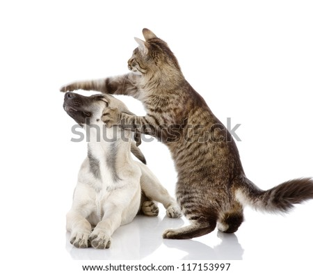 the cat beats a paw on a nose of a dog. isolated on white background