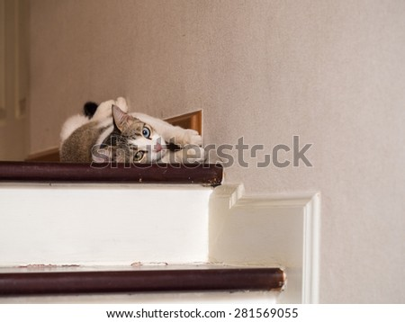 the cat different eye colour is sleeping on the floor - stock photo