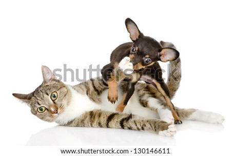the cat fights with a dog. isolated on white background - stock photo