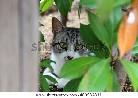 the cat in the forest