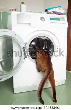 the cat in the washing machine - stock photo