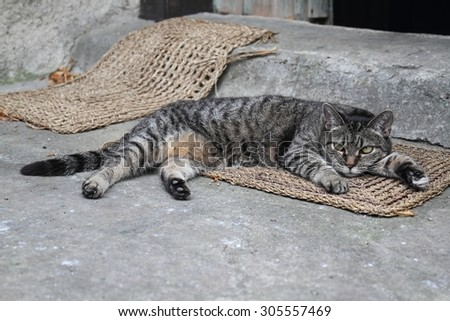 The cat is heated in the sun - she is lying on the doormat. - stock photo